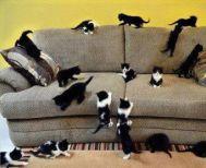Άνδρας ζούσε με 110 γάτες σε διαμέρισμα στην Ισπανία