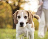 Το πρόστιμο για όσους δεν μαζεύουν τις ακαθαρσίες του σκύλου από τους δρόμους και τα πάρκα