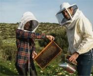 Δωρεάν εκπαίδευση μελισσοκομίας στο Κέντρο «Δήμητρα» Μακροχωρίου