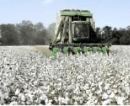 Διεπαγγελματική Οργάνωση Βάμβακος:  Πρωταρχικής σημασίας η  διαφύλαξη   της ποιότητας του βαμβακιού