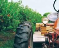 Έκτακτες αποζημιώσεις και χρηματοδοτήσεις - 13 μέτρα για ενίσχυση αγροτών