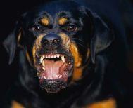 Σκύλος του έφαγε το δάχτυλο!!!