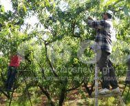 Ανακοίνωση του Ενιαίου Συλλόγου   Αγροτών Νάουσας για τους Εργάτες γης