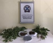 Καλλιεργούσε 34 δενδρύλλια κάνναβης - Συνελήφθη από την Ασφάλεια Βέροιας