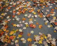Και επίσημα από χθες… Φθινόπωρο!