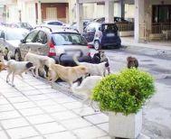 Εξώδικο και απαντήσεις για το δημοτικό καταφύγιο ζώων της Βέροιας