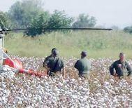 Αναγκαστική προσγείωση ελικοπτέρου «κουνούπι»  σε  βαμβάκια στην Αλεξάνδρεια