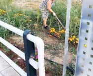 Ο Δήμος διαμόρφωσε  το πράσινο και οι κάτοικοι προσφέρθηκαν να  το περιποιούνται