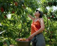 Αγροτουρισμός: Καλλιεργήστε τουρίστες…στο χωράφι σας!