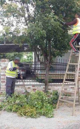 Ανακοίνωση Υπηρεσίας Πράσινου Νάουσας για το κλάδεμα των δέντρων σε κοινόχρηστους χώρους