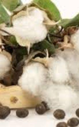 Διεπαγγελματική Οργάνωση Βάμβακος: Πληροφορίες αγοράς αγροεφοδίων βάμβακος από χώρες της ΕΕ