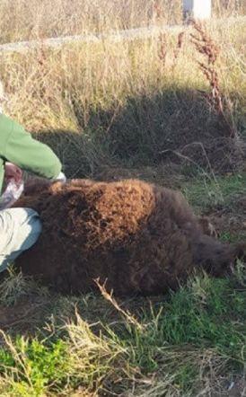 Νεκρή αρκούδα σε τροχαίο στην Καστοριά