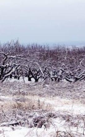 ΕΛ.Γ.Α. Βέροιας: Προθεσμία για υποβολή δηλώσεων ζημιάς από παγετό της 17/03/2020 - Κατεβάστε το έγγραφο της προσωρινής δήλωσης