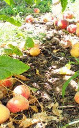 Υπουργείο Αγροτικής Ανάπτυξης και Τροφίμων: Άμεσα η έκτακτη οικονομική ενίσχυση de minimis στα ροδάκινα Συμπεριλαμβάνονται και τα συμπύρηνα και τα νεκταρίνια