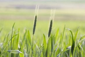 Στην  Ημαθία χτυπά  η καρδιά της αγροτικής πολιτικής