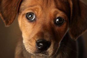 Νάουσα: Αδέσποτα ζώα βρέθηκαν νεκρά από φόλες! - Σε μήνυση κατά αγνώστων προχωρά ο Δήμος