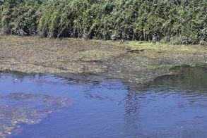 ΟΙΚΟΛΟΓΙΚΗ ΟΜΑΔΑ ΒΕΡΟΙΑΣ: Νεκρά ψάρια στον Λουδία, εδώ και πέντε ημέρες