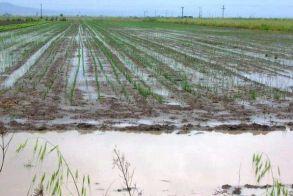 Αιτήσεις χορήγησης ενίσχυσης ΚΟΕ για τις πλημμύρες 2014-2015 στον δήμο Βέροιας
