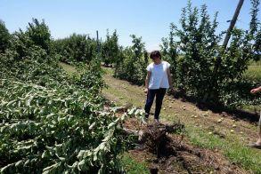 Επαφές της Φρόσως Καρασαρλίδου με ΕΛΓΑ και αγρότες για τις καταστροφές από τη θεομηνία - Άμεση στελέχωση του τοπικού ΕΛΓΑ με επιπλέον γεωπόνους