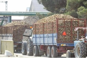 Σταύρος Αραχωβίτης: «Ένα εκατομμύριο ευρώ ενισχύσεις de minimis στους τευτλοπαραγωγούς»
