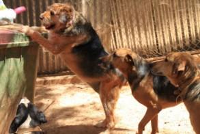 Δήμος Βέροιας: Φροντίζουμε για τη σίτιση των αδέσποτων ζώων και ζητούμε τη συνεργασία φιλοζωικών σωματείων και πολιτών
