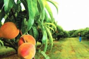 Να χτυπηθεί η μαύρη διακίνηση των φρούτων  στην ρίζα της