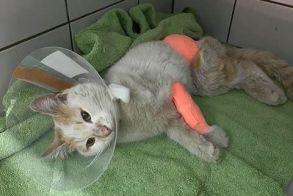 Αδιανόητο βασανιστήριο στο Βόλο! - Έδεσαν με σύρμα γάτο και τoν έκοψαν στα δυο!