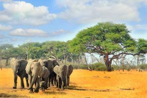 Η Ναμίμπια πουλάει άγρια ζώα για να τα σώσει από την ξηρασία
