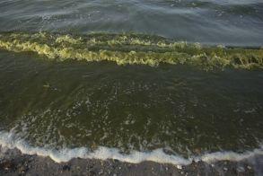 Επικίνδυνο φύκι ξεβράζεται στις ακτές της Γαλλίας: «Μπορεί να σκοτώσει μέσα σε λίγα δευτερόλεπτα»