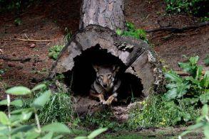WWF: Μισός αιώνας καταστροφής για την άγρια ζωή, τα δύο τρίτα εξαφανίστηκαν!