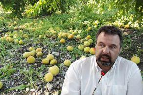 Στ. Αραχωβίτης: Τρεις διαδοχικές συσκέψεις σε μία ημέρα στο Υπουργείο, ούτε ένα μέτρο για τους ροδακινοπαραγωγούς Ημαθίας