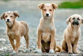 600.000 σε 120 Δήμους για καταφύγια Αδέσποτων Ζώων - Τα ποσά για τους Δήμους Αλεξάνδρειας και Βέροιας
