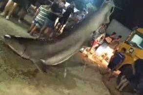 Πάτρα: Ένας καρχαρίας ασήκωτος! Με γερανό τον σήκωσαν οι ψαράδες (Βίντεο)