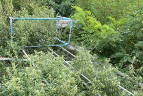 Ημαθία: Συνελήφθη για καλλιέργεια και κατοχή κάνναβης