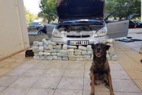Λαγωνικό της Αστυνομίας εντόπισε πάνω από 32 κιλά κάνναβης! Δείτε το βίντεο