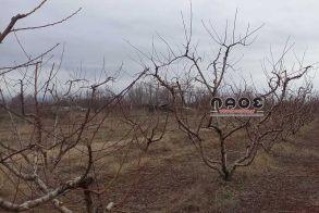 Δήμος Βέροιας: Κοινοποιήθηκαν από τον ΕΛΓΑ οι πίνακες εκτιμήσεων φυτικής παραγωγής για τις ζημίες από την ανεμοθύελλα της 4ης Μαΐου 2020