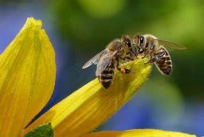 Συμμετοχή στο πρόγραμμα βελτίωσης των συνθηκών παραγωγής και εμπορίας των προϊόντων μελισσοκομίας για το έτος 2021