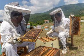 Ταχύρρυθμο σεμινάριο για επαγγελματίες Μελισσοκόμους της Πέλλας - Οι θεματικές ενότητες
