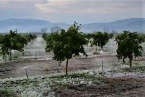 Παγετός 17ης Μαρτίου 2020: Ανακοινώθηκαν τα πορίσματα εκτίμησης ζημιών για την Δ.Ε. Αλεξάνδρειας
