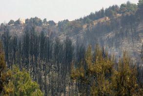 WWF: Χάθηκαν 430 εκατομμύρια στρέμματα δασών σε 13 χρόνια - Ποια είναι η κύρια αιτία αυτής της καταστροφής