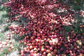 Ο Αγροτικός Σύλλογος Ημαθίας για την επίσκεψη του  Υπουργού Αγροτικής Ανάπτυξης: «O κ. Αραχωβίτης ήρθε, είδε και απήλθε»