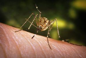 Ιός Δυτικού Νείλου: Τα μέτρα ατομικής προστασίας από τα κουνούπια