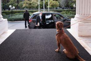 Το Μέγαρο Μαξίμου υιοθέτησε για πρώτη φορά αδέσποτο σκύλο (Εικόνες)