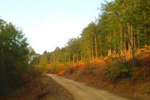 Πρόσκληση του Δασικού Συνεταιρισμού Άνω Σελίου στην κοπή βασιλόπιτας