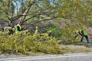 Προσοχή: προσωρινές  κυκλοφοριακές ρυθμίσεις σήμερα στο δρόμο  Νησελίου – Κυψέλης Ημαθίας, λόγω κοπής δέντρων