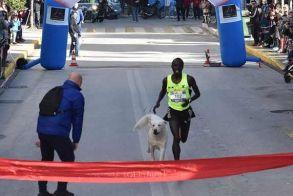Στον Φιλίππειο Δρόμο έτρεξε και τερμάτισε δίπλα στον Κενυάτη δρομέα ένα αδέσποτο!!!