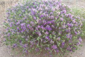 Θ υ μ ά ρ ι (θύμος)  Ένα πολύ γνωστό φυτό για τις  εξαιρετικές αρωματικές και θεραπευτικές του ιδιότητες