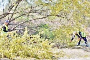 Προσοχή, συνεχίζεται η κοπή δένδρων  στο δρόμο Νησελίου - Κυψέλης