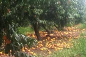 Σήμερα αναμένεται  να πληρωθούν οι παραγωγοί τις αποζημιώσεις για τις  περσινές βροχοπτώσεις