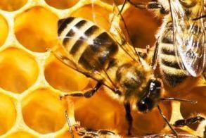 Εκπαιδευτική-  ενημερωτική   εκδήλωση για   μελισσοπαραγωγούς
